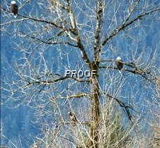 eagletree-14