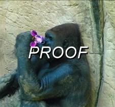 Gorilla Flower Final
