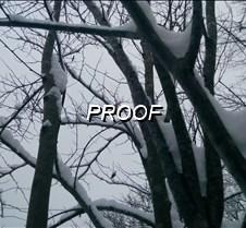 wintertreeEWATERMARK5