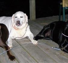 pups! sign