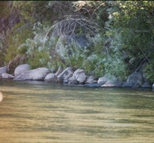 Life along the Truckee River