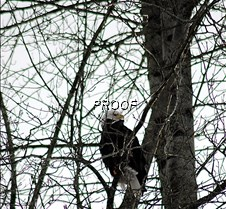 eagletree-4