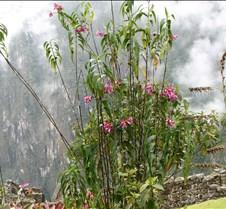 Peru 343