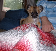 puppy picts 9-21-03 077