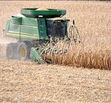Corn harvest underway