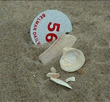 Belmar shells