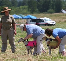 Whippets_8July_Run2_Course5_5017