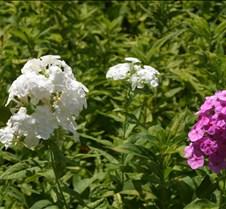 Flowers 014