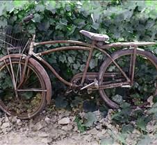 BikeInLeavesGreen