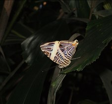 Butterflies in Florida There is no editing to these photos.  They were taken at the University of Florida butterfly exhibit.