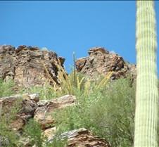 Tucson Sabino Canyon 1