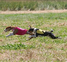 Basenjis_8Jul_Run1_Course2_0403CCR2