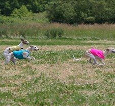 Whippets_8July_Run2_Course1_4936CR