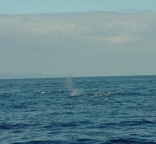 Whale Spout-1