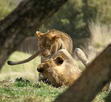 Wild Animal Park 03-09 142