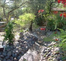 Tucson Lazy K garden