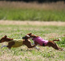 Basenjis_8Jul_Run1_Course1_0379