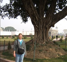 Red Fort Tree