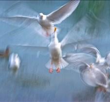Whimsical+Seagulls