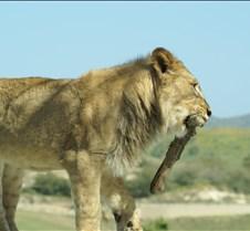 Wild Animal Park 03-09 210