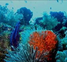 reef3