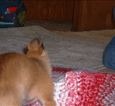 puppy picts 9-21-03 069