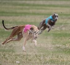 Specials_Run1_Beauson_Dusty_3320_8X10