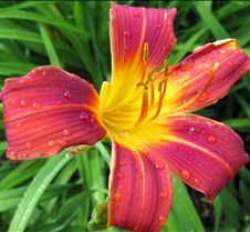 Red and Yellow, Dew