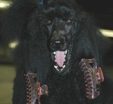 Poodle Parlour 3