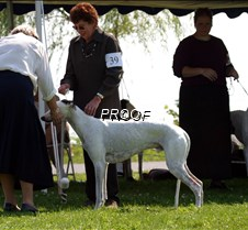 2004 GCA National Specialty (Eastern) photos from Eastern Specialty and all-breed show the next day