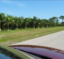 Pine Island palm tree farms