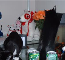 kitty picts dec 03 009
