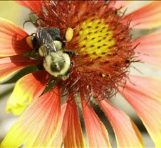 Garden Fall 2008 -2