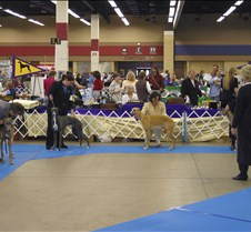 Best_Puppy_Competition_8651CC