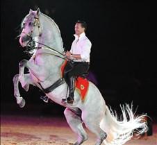 White Horse Equine Elegance