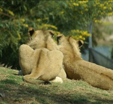 Wild Animal Park 03-09 176