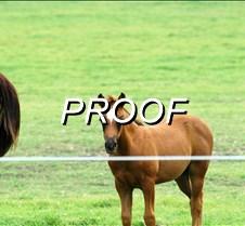5/27/2007 Horses