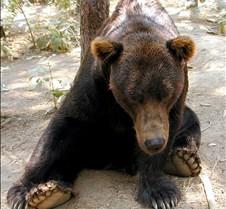 072402 Kodiak Bear Male 90 MK