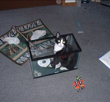 kitty picts dec 03 003