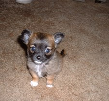 Puppy Picts 048