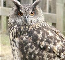 062802 OWL 49