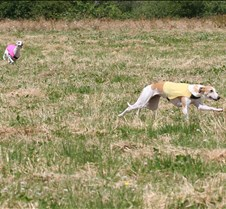 Whippets_8July_Run2_Course5_5029CR