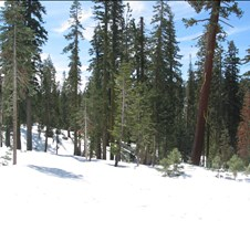 Winter 2004 Serene Lakes, Soda Springs, Yosemite (Crane Flat - Tamarack Flat)