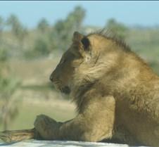 Wild Animal Park 03-09 217