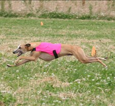 Whippet_8Jul_BOB_RUN_OFF_5404CR