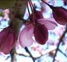 pinkflowertree2