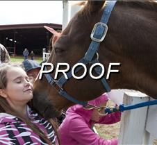 050413-horses-02