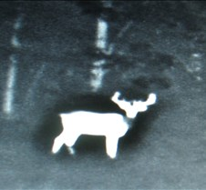 LBL Infrared Deer Survey Photos A few photos from the monitor showing a few big deer seen on LBL during an infrared survey- normally conducted during February-March.  Things that are warmer than the surrounding are look more white.  Small limbs and leaves lose heat quickly after dark, wh