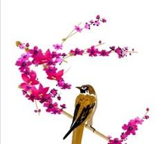 Sparrow & Plum