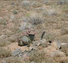 Desert cactus flowers